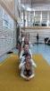 SportAG Schulwettkampf_9